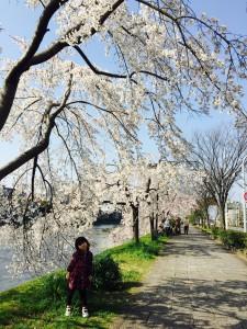 momo's Aroma room 京都のリンパマッサージ & アロマ-【ブログ】桜の下で汗をかく