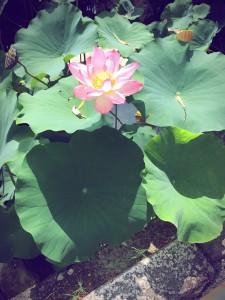 momo's Aroma room 京都のリンパマッサージ & アロマ-【ブログ】充実の夏の日。