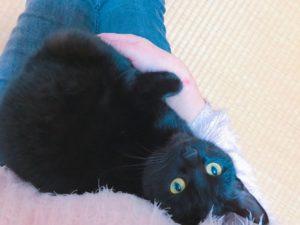 momo's Aroma room 京都のリンパマッサージ & 子連れで行けるアロマサロン-猫を飼うことになりました。