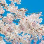 momo's Aroma room 京都のリンパマッサージ & 子連れで行けるアロマサロン-ブライダルエステのご紹介